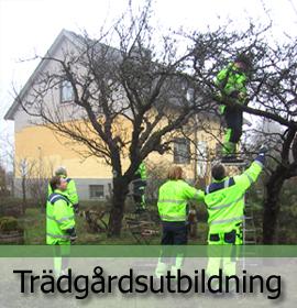 Trädgårdsmiljö i Kristianstad